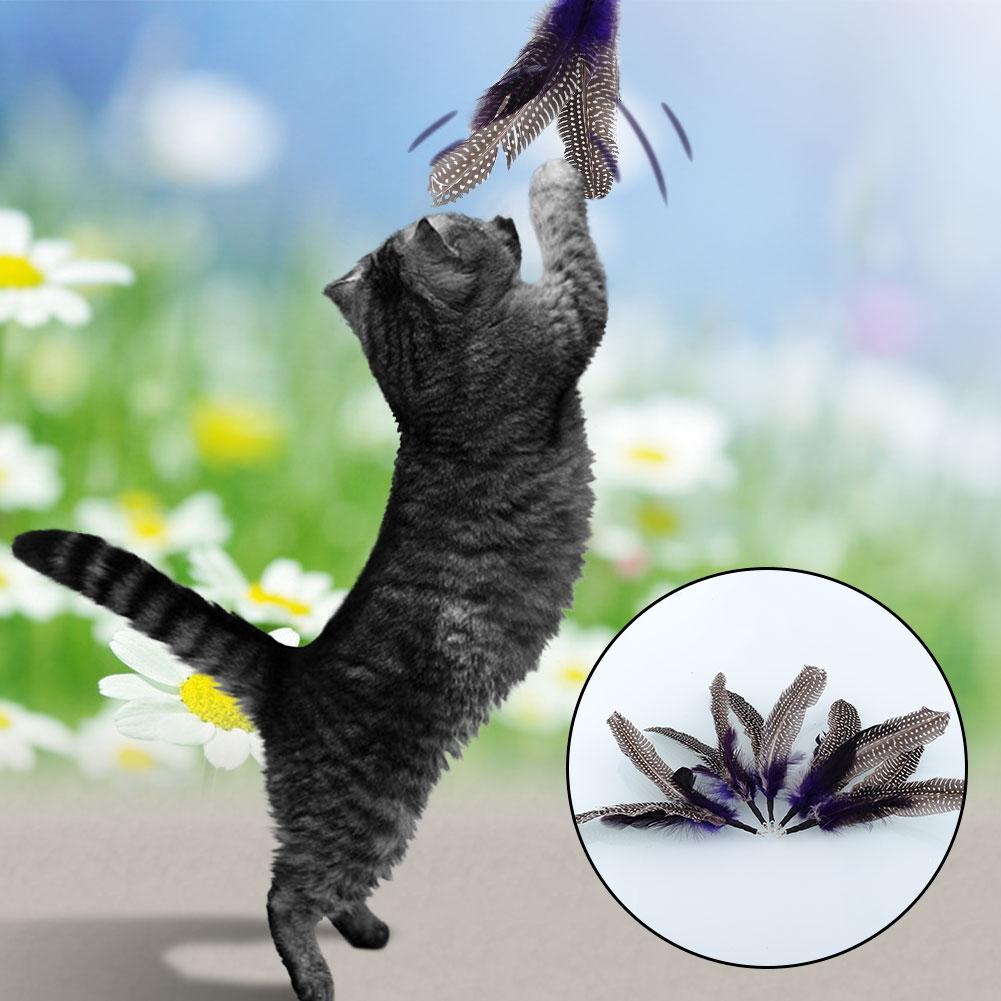 Pet 5 Refills For Da Bird Feather Wand Cat Toy Kitten